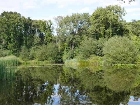 Abbrook Pond