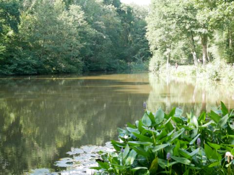 Fenneck Ponds