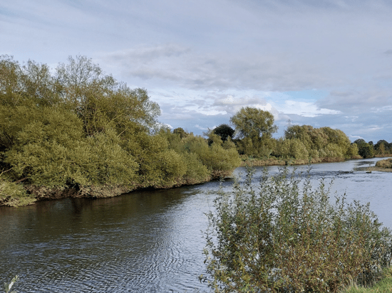River Exe – Countess Wear