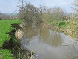 River Culm – Beare Gate