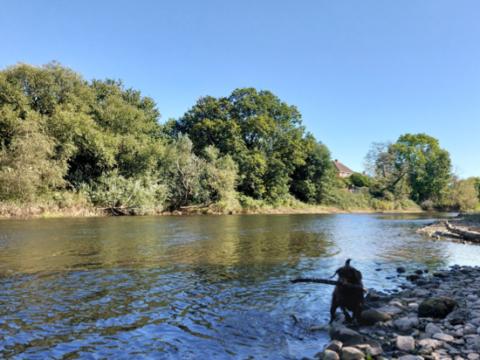 River Exe – Weirfield